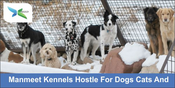 Manmeet Kennels Hostle For Dogs Cats And