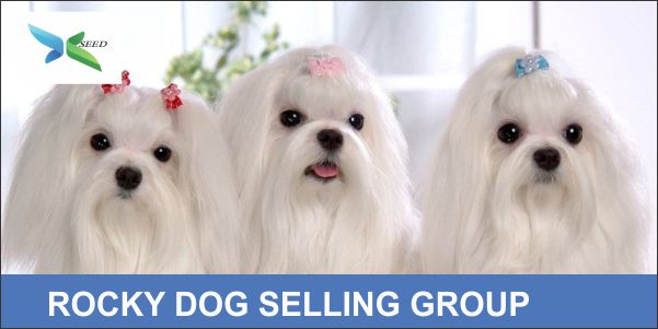 ROCKY DOG SELLING GROUP