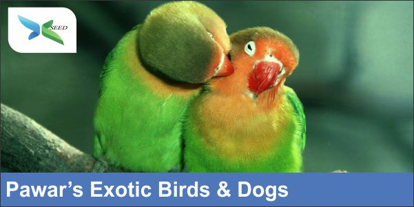 Pawar's exotic birds & dogs